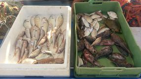 Fische im Markt, Griechenland Stockfotos