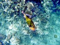 Fische im Meer Stockfotos