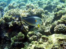 Fische im Meer Stockfoto