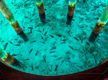 Fische im Meer, Draufsicht Lizenzfreies Stockbild