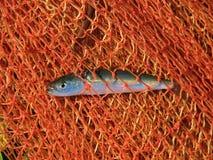 Fische im Netz Stockfotografie
