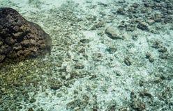 Fische im offenbar Meer Stockfotografie