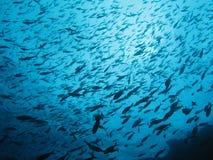 Fische im Ozean Stockfotos