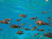 Fische im Ozean lizenzfreie stockfotografie