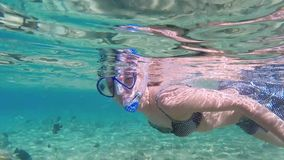 Fische im Roten Meer stock video