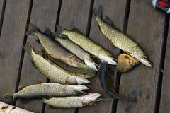 Fische im See Lizenzfreie Stockfotos