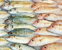 Fische im Supermarkt Lizenzfreie Stockfotos