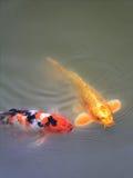 Fische im Teich lizenzfreie stockbilder