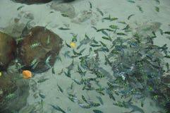 Fische im Wasser Lizenzfreie Stockfotos