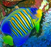 Fische im Wasser lizenzfreies stockfoto