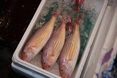 Fische innerhalb eines Kastens Stockbilder