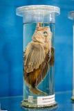Fische konserviert Lizenzfreie Stockfotografie