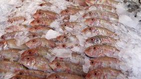 Fische am Markt Stockfotografie