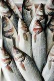Fische am Markt Stockbild