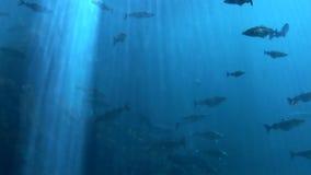 Fische - Meeresflora und -fauna stock footage
