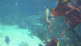 Fische - Meeresflora und -fauna stock video