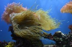 Fische, Meerespflanzen, Luftblasen Lizenzfreie Stockfotos