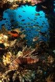 Fische, Meerespflanzen, Luftblasen Stockbild