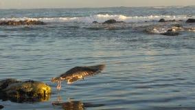 Fische, Meerespflanzen, Luftblasen Lizenzfreie Stockfotografie