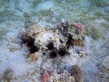 Fische, Meerespflanzen, Luftblasen Stockfoto
