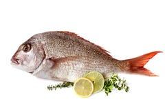Fische mit dem Zitronen-Kalk und Kräutern lokalisiert Lizenzfreie Stockfotografie