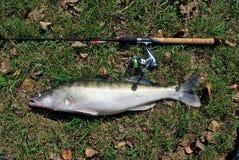 Fische nähern sich Longlinegestänge Lizenzfreie Stockfotos