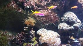 Fische rosa gelbes waterworld Lizenzfreie Stockfotografie