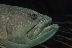Fische schließen oben Stockfotografie