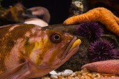 Fische schließen oben Stockbild