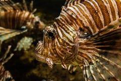 Fische schließen oben Stockfotos