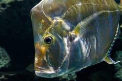 Fische schließen oben Lizenzfreie Stockfotos
