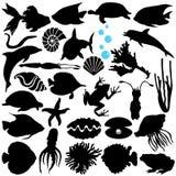 Fische, Sealife, (Marinelebensdauer, essbare Meerestiere) Lizenzfreie Stockfotos