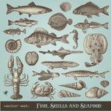 Fische, Shells und essbare Meerestiere Stockbild