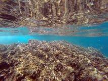 Fische in Sizilien Lizenzfreie Stockbilder