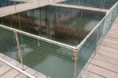 Fische sperren das Schwimmen in den Flussgebrauch für die Zucht von Fischen ein, aufgebaut mit blauen Plastikfässern, Eisenrohren stockfotografie