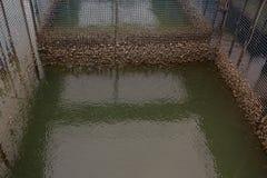 Fische sperren das Schwimmen in den Flussgebrauch für die Zucht von Fischen ein, aufgebaut mit blauen Plastikfässern, Eisenrohren stockfoto