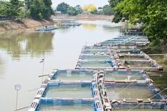 Fische sperren die Landwirtschaft im Fluss ein. lizenzfreies stockfoto