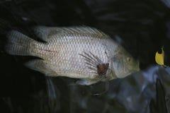 Fische starben weil Abwasser Stockfotos