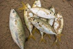 Fische sterben auf dem Strand durch Verschmutzung Lizenzfreies Stockfoto