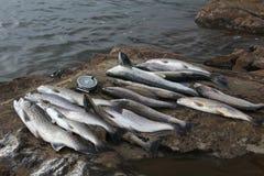 Fische und Bandspule Lizenzfreie Stockbilder