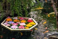 Fische und Blumen Koi in einem Teich Lizenzfreie Stockfotografie