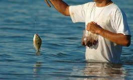Fische und ein Fischer Stockfotos