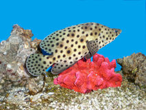 Fische und eine Koralle Stockfoto
