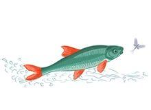 Fische und Eintagsfliegen Stockbilder