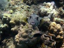 Fische und Kamera lizenzfreies stockbild