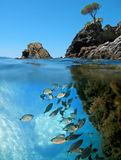 Fische und kleine Insel lizenzfreie stockbilder