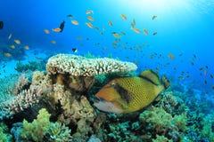 Fische und Koralle Stockfoto