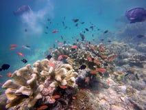 Fische und Koralle Lizenzfreies Stockbild