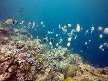 Fische und Koralle Stockfotos