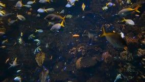 Fische und Koralle im Aquarium stock footage